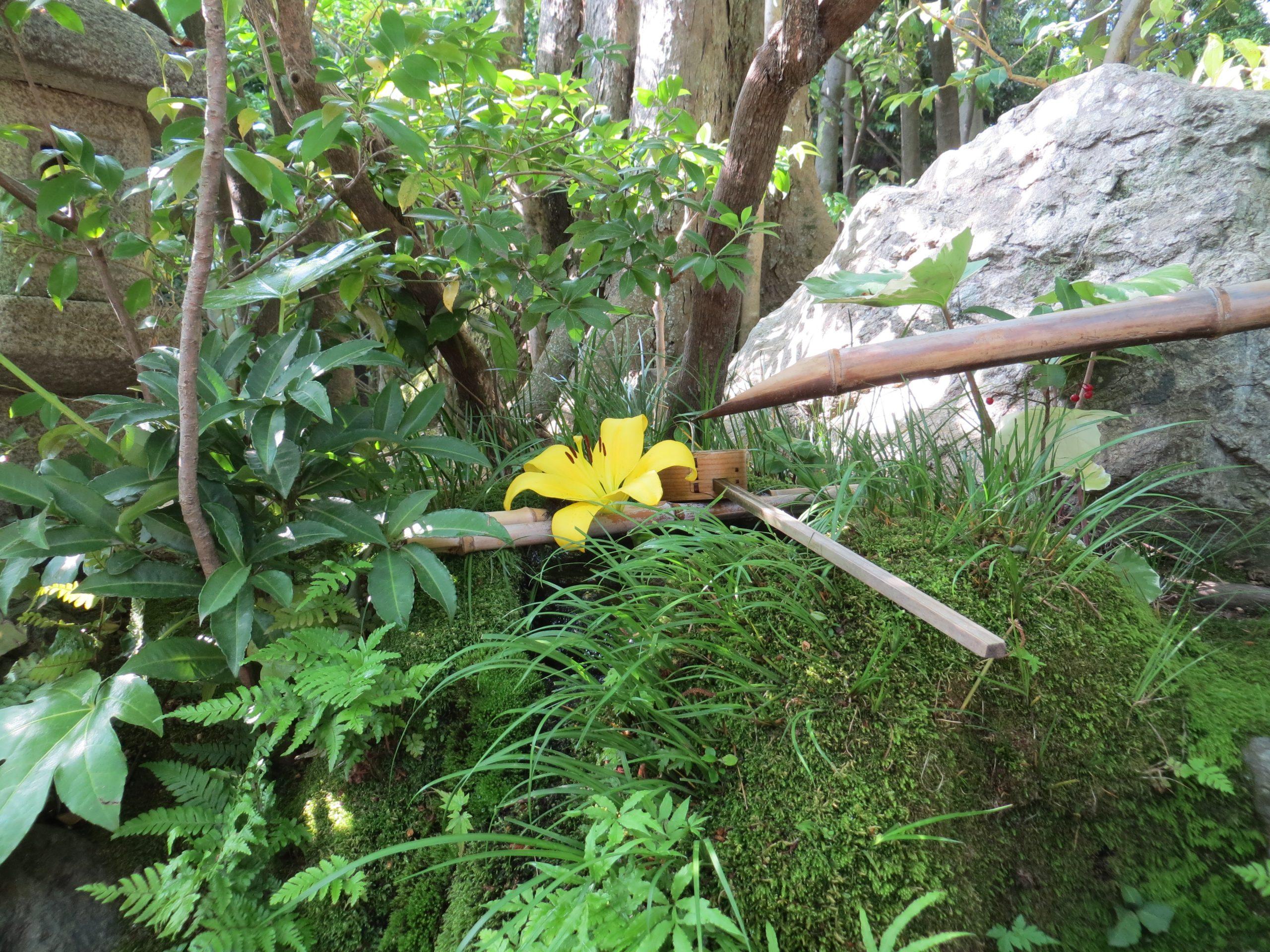 Programme MBSR Atelier découverte zen fontaine japonaise bambou fleur Méditation Mindfulness